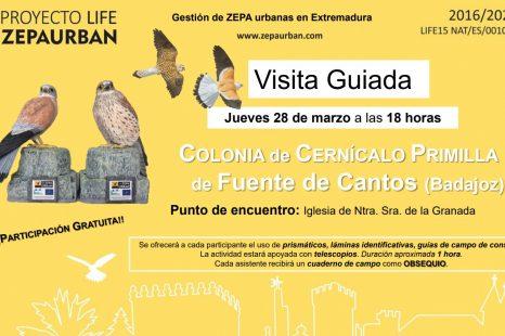 Visita Guiada Colonia Cernícalo Primilla